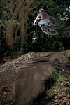 table into the step up/berm. photo by Rohan Batt