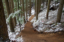 Video: Treelines